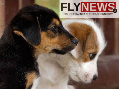 adespotazoa-flynews